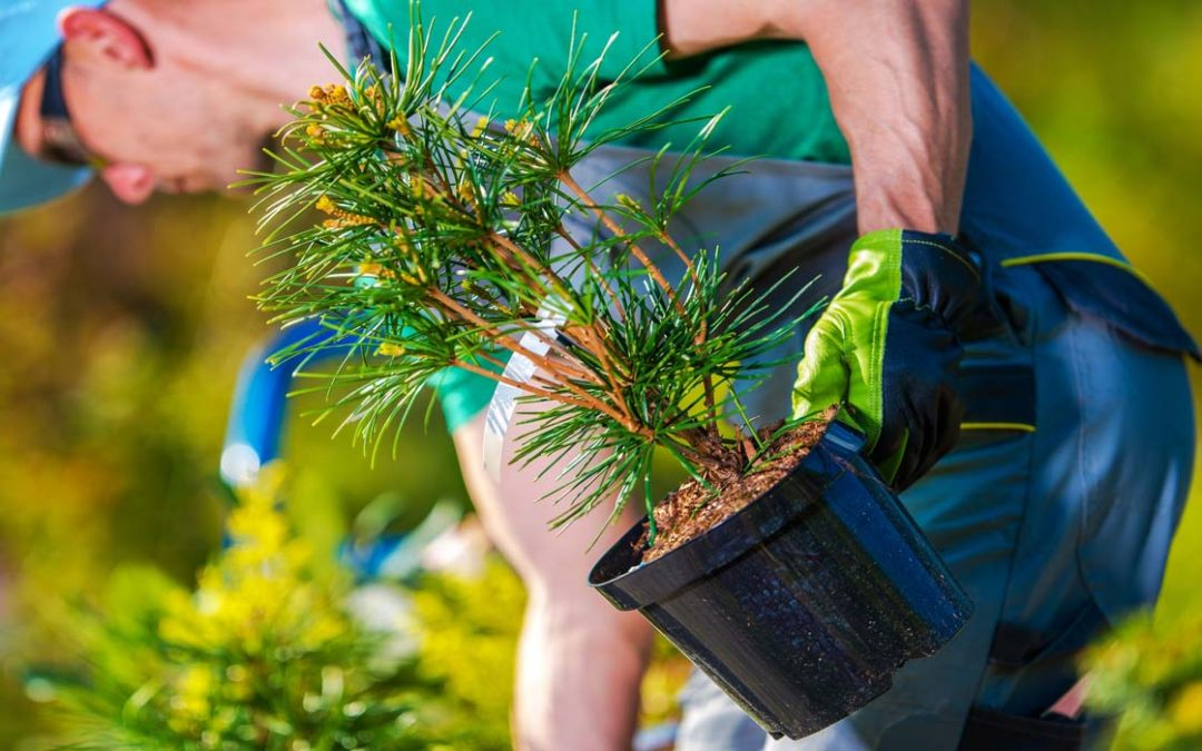 Why Should You Hire A Professional Landscaping Company?